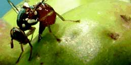 mosca-olivo-trattamenti
